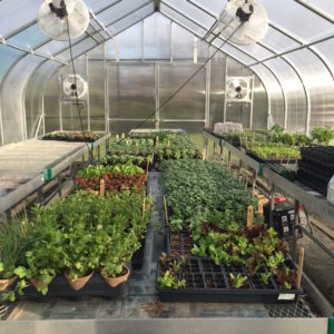 DPR's Green House Cooperative is a great space for urban non-profits to start seedlings in exchange for public programming.