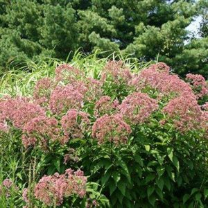 Pat Reilly, Merrifield Plant Specialist Naturally Adapted For Our Local  Soils And Climate, Native Plants Typically Require Less Fertilizer,  Maintenance And ...